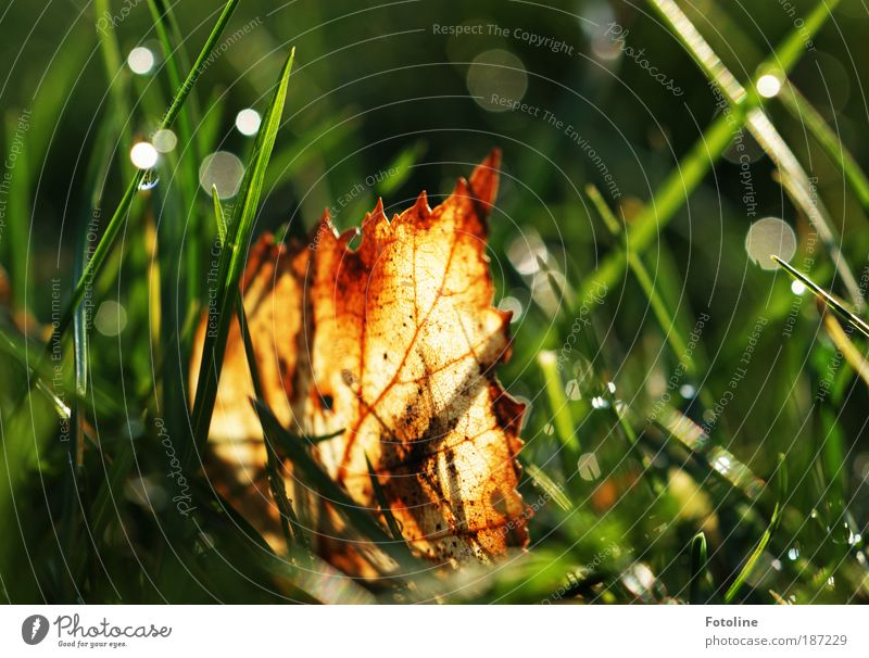 Hidden in the grass Environment Nature Landscape Plant Elements Water Drops of water Autumn Climate Weather Beautiful weather Grass Leaf Park Meadow Bright Near