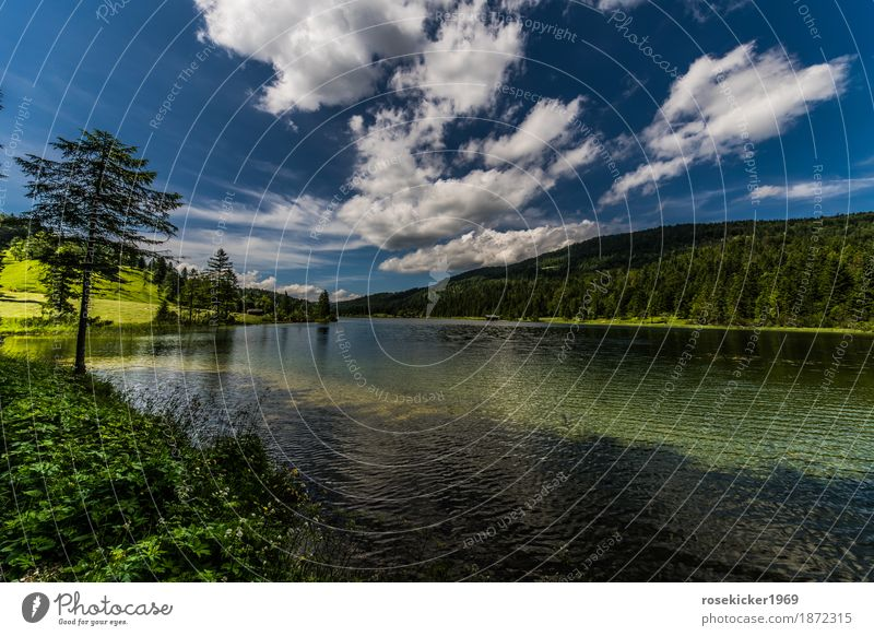 Ferchensee Swimming & Bathing Vacation & Travel Freedom Summer vacation Mountain Hiking Environment Nature Landscape Plant Water Sky Clouds Beautiful weather