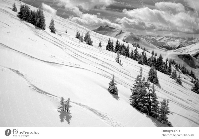 downhill run Nature Landscape Clouds Winter Snow Tree Rock Alps Mountain Kitzbühel Alps Peak Snowcapped peak Glacier Cold Black White Calm Ski run Ski tour