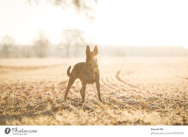 a cold winter morning Dog Winter morning in the morning chill Sun Sunlight sunshine stroll Walk the dog walk To go for a walk Animal Pet Exterior shot