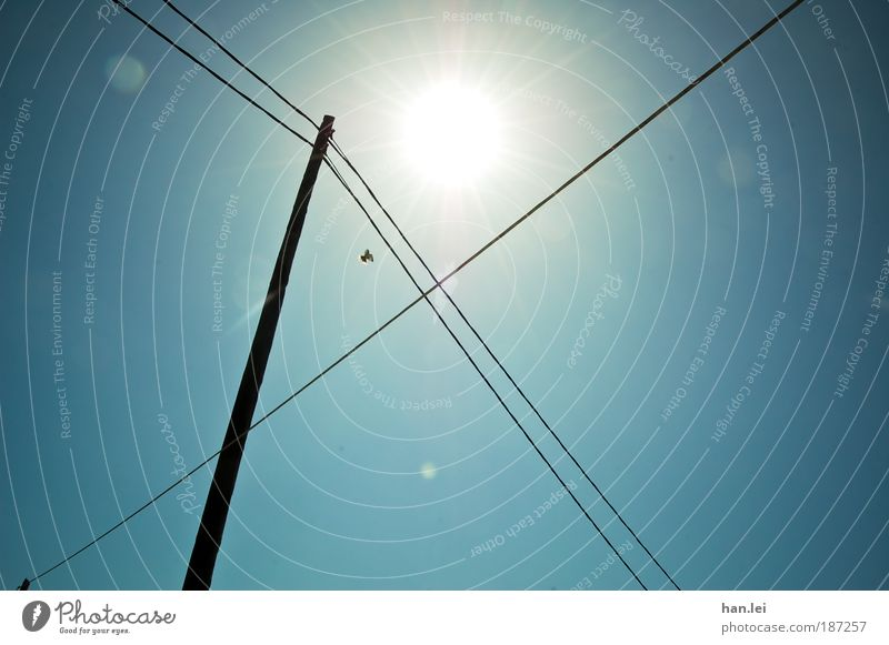 Sky Blue Black Freedom Bird Flying Electricity Cable Telecommunications Beautiful weather Electricity pylon Senses Transmission lines Connect Symmetry Blue sky