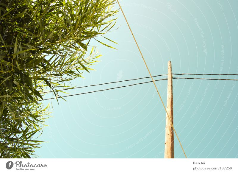 Tree Green Blue Plant Leaf Wood Cable Bushes Beautiful weather Electricity pylon Connect Interlaced Blue sky Cloudless sky