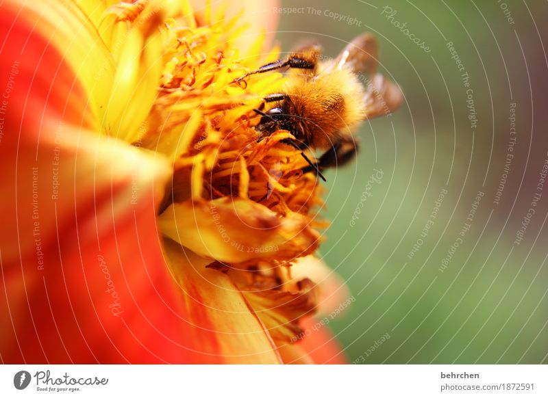 come back soon! Nature Plant Animal Summer Flower Leaf Blossom Garden Park Meadow Wild animal Bee Animal face Wing Bumble bee 1 Blossoming Fragrance Flying