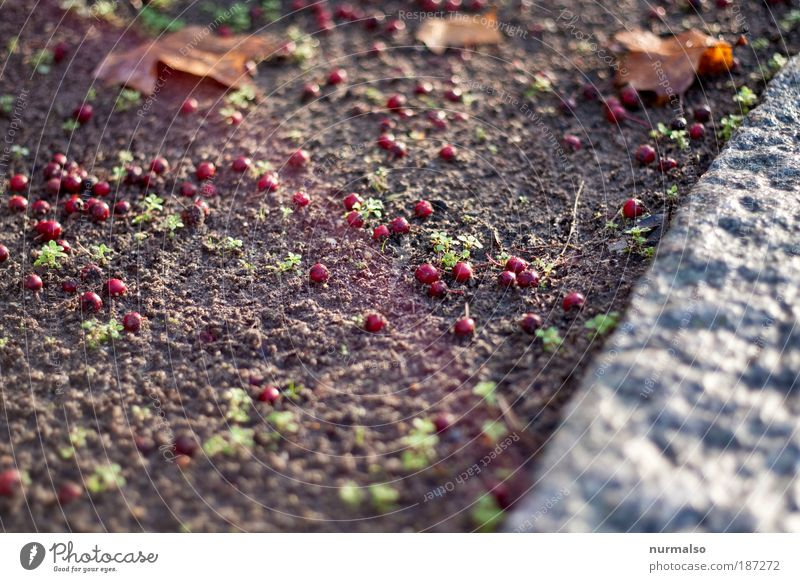 Nature Plant Leaf Winter Street Autumn Art Stone Sand Fruit Park Lie Earth Authentic Communicate Simple