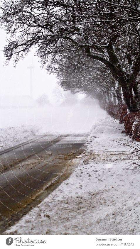 Vestergade Winter Ice Frost Snow Forest Wisdom Snowdrift Street filth Denmark Cold To go for a walk poor visibility Winter vacation Exterior shot