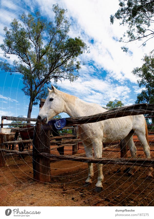 horse farm Leisure and hobbies Vacation & Travel Ride Nature Animal Horse 1 White Australia Australia + Oceania Down under Queensland myella Fence age ungulate