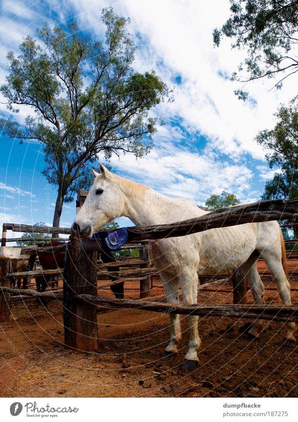 Nature White Vacation & Travel Animal Horse Leisure and hobbies Farm Pasture Fence Mammal Australia Ride Enclosure Outback Queensland Australia + Oceania