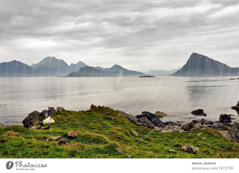 Norway lofoten islands in haze. Cloudy Nordic day. Sky Nature Vacation & Travel Summer Green Ocean Landscape Clouds Beach Mountain Meadow Lifestyle Natural Coast Grass Rock