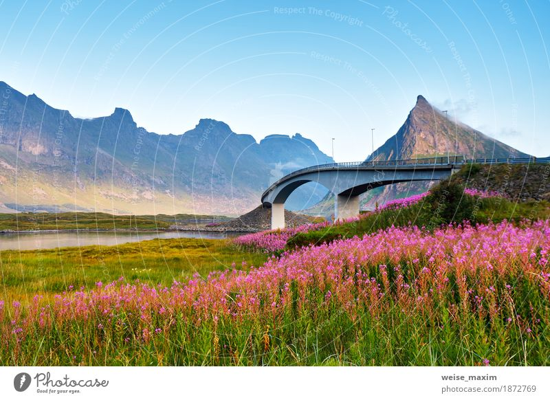 Norway sunny summer day. Bridge over the fjord Sky Nature Vacation & Travel Blue Summer Flower Ocean Landscape Red Far-off places Mountain Architecture Meadow