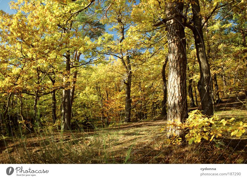 Nature Beautiful Tree Calm Forest Colour Relaxation Life Freedom Autumn Landscape Environment Lanes & trails Dream Time Uniqueness
