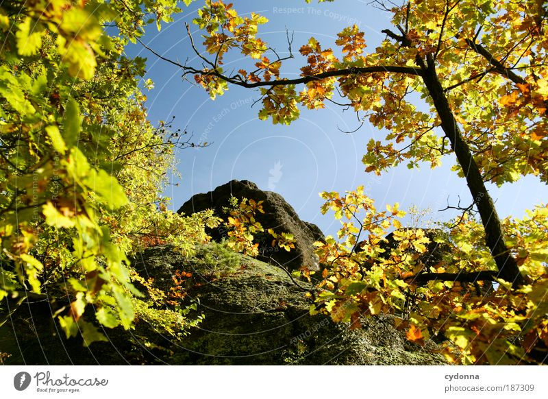 Nature Beautiful Tree Calm Leaf Forest Life Relaxation Autumn Mountain Lanes & trails Environment Time Rock Perspective Change