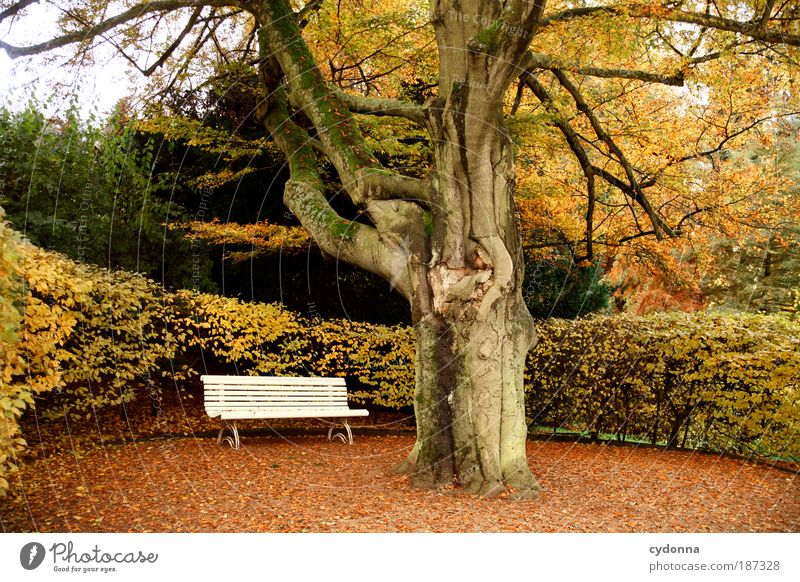 Nature Beautiful Tree Calm Leaf Loneliness Life Relaxation Autumn Emotions Death Dream Bench Lanes & trails Park Landscape