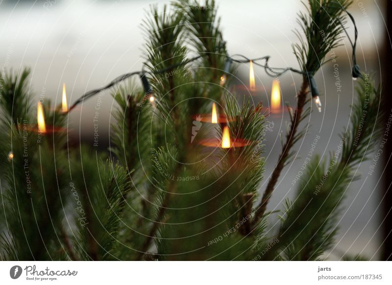 Advent, Advent..... Garden Decoration Candle Hope jarts Window Colour photo Exterior shot Interior shot Deserted Copy Space top Copy Space bottom Day Light