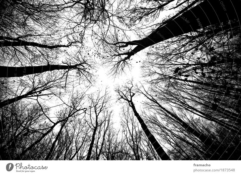 dark forest Environment Nature Landscape Plant Sky Autumn Tree Forest Wood Esthetic Authentic Dark Gigantic Creepy Tall Sustainability Strong Emotions Calm