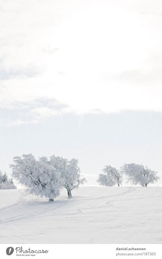 White Winter Vacation & Travel Snow Landscape Ice Bright Frost Tourism Climate Nature Beautiful weather Winter sports Winter vacation