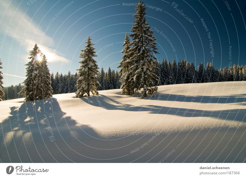 Nature Tree Winter Vacation & Travel Calm Forest Snow Relaxation Landscape Ice Environment Frost Climate Beautiful weather Light Blue sky