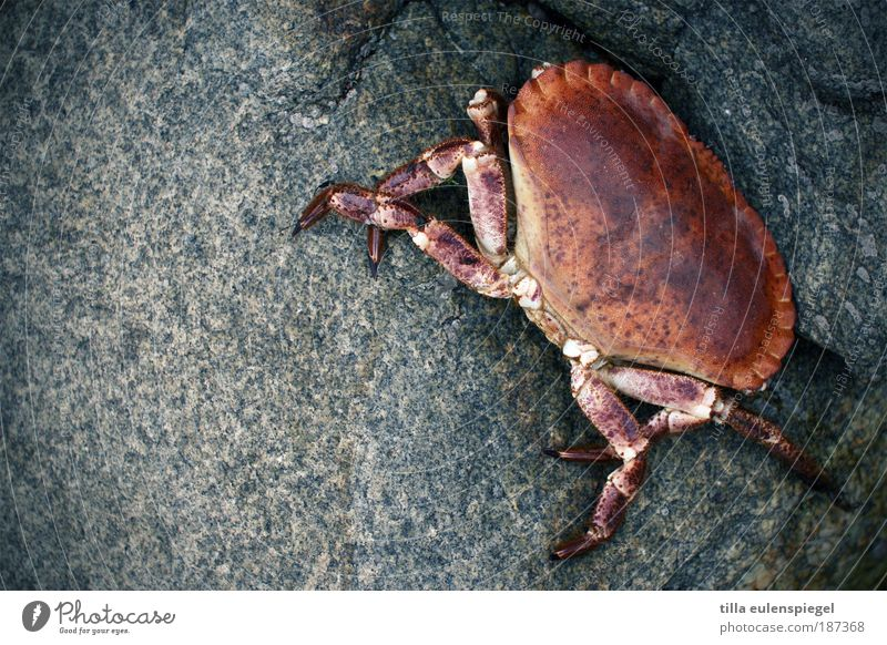 Pozwicker Seafood Vacation & Travel Beach Ocean Environment Nature Coast Wild animal Shrimp Shellfish 1 Animal Stone Wait Authentic Cold Natural Original Blue