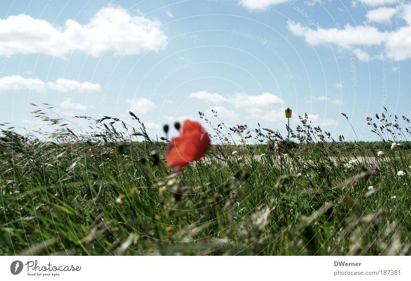 Nature Beautiful Sky Sun Flower Green Blue Plant Red Summer Clouds Meadow Emotions Grass Landscape Dance