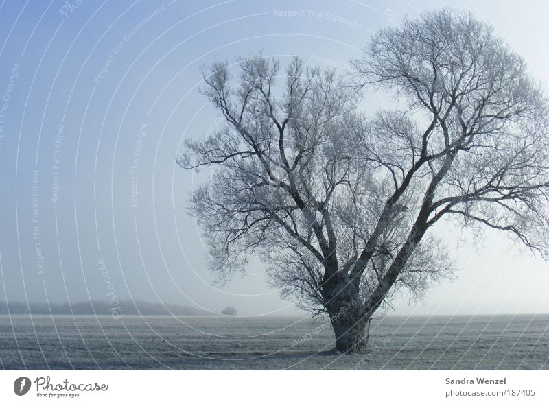 ice tree Environment Nature Landscape Plant Earth Cloudless sky Horizon Winter Climate Climate change Weather Beautiful weather Fog Ice Frost Tree Field Hope