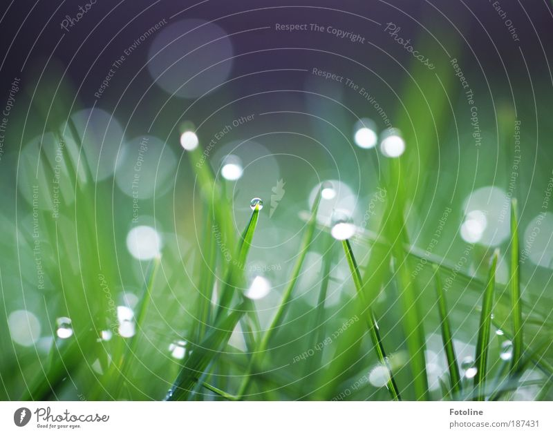 gleam Environment Nature Landscape Plant Elements Air Water Drops of water Spring Summer Climate Weather Beautiful weather Grass Meadow Cool (slang) Bright Cold