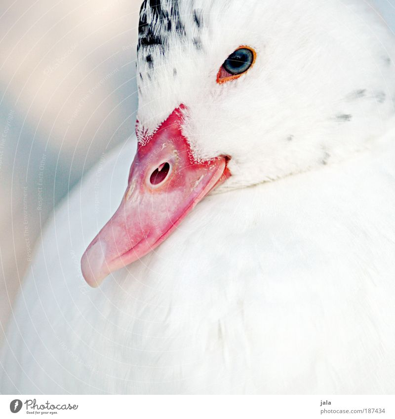 White Beautiful Animal Wild animal Wing Feather Animal face Zoo Duck Beak Section of image Partially visible Bird Petting zoo Duck bill