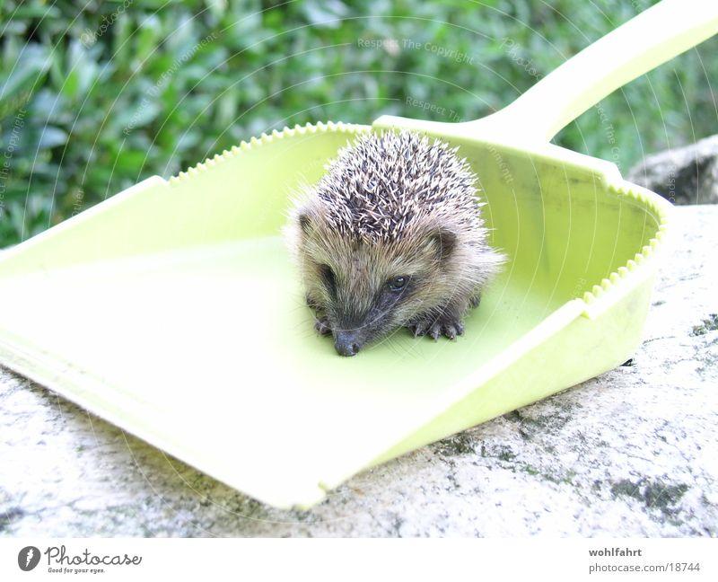 rescued hedgehog Hedgehog Rescue Shovel Animal lover hedgehog baby