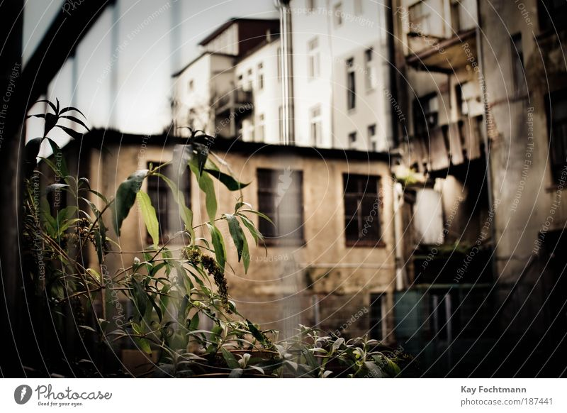 idyllic backyard Flat (apartment) House (Residential Structure) Redecorate Plant Wild plant Town Deserted High-rise Building Facade Balcony Fence Old Threat