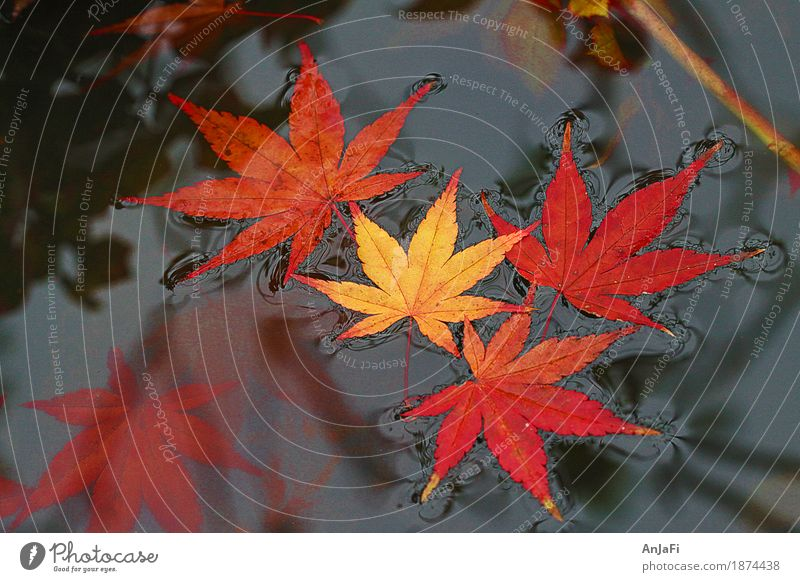 Nature Beautiful Red Leaf Yellow Autumn Esthetic Transience Change Friendliness