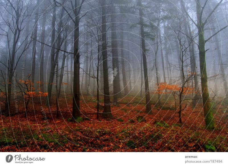 nebulous Nature Landscape Plant Earth Autumn Bad weather Fog Tree Forest Cold Red Moody Calm Colour photo Multicoloured Exterior shot Deserted Day Evening