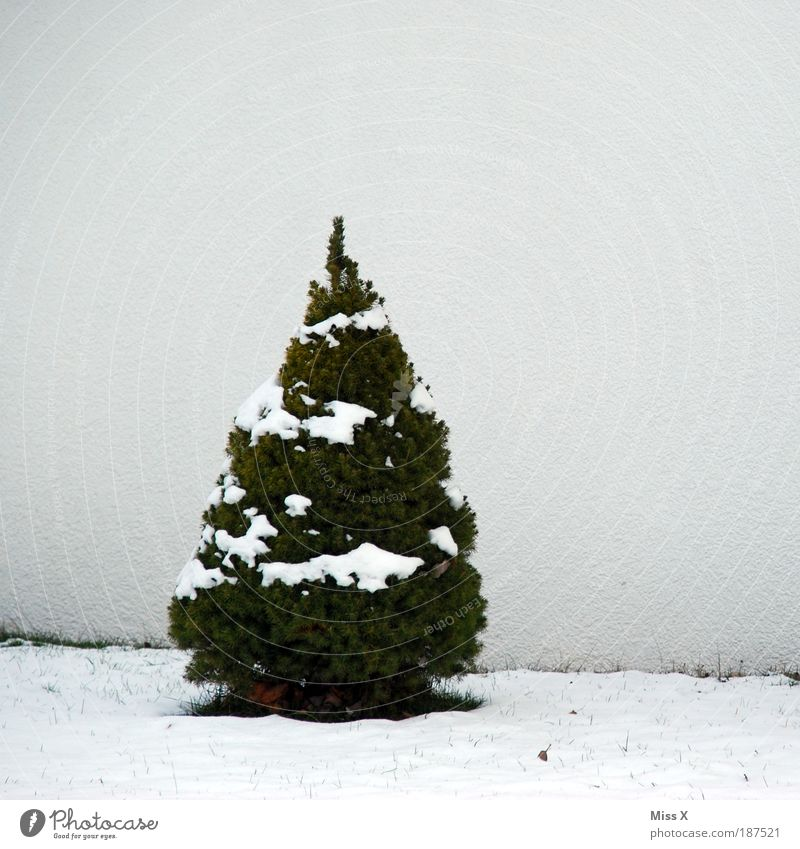 Nature Christmas & Advent Tree Winter Cold Snow Ice Small Vacation & Travel Frost Christmas tree Living or residing Christmas decoration Winter vacation
