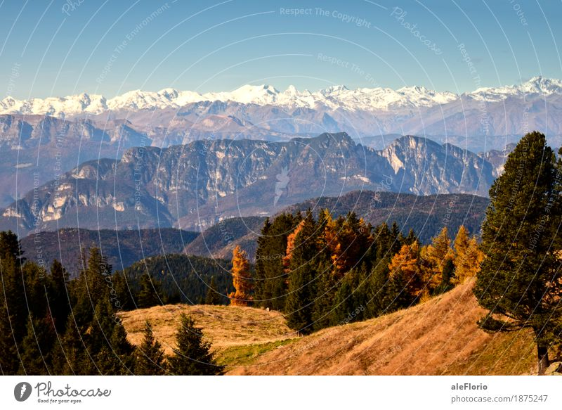 Alpine landscape Nature Blue Green White Tree Landscape Joy Mountain Environment Yellow Life Autumn Grass Snow Happy Brown