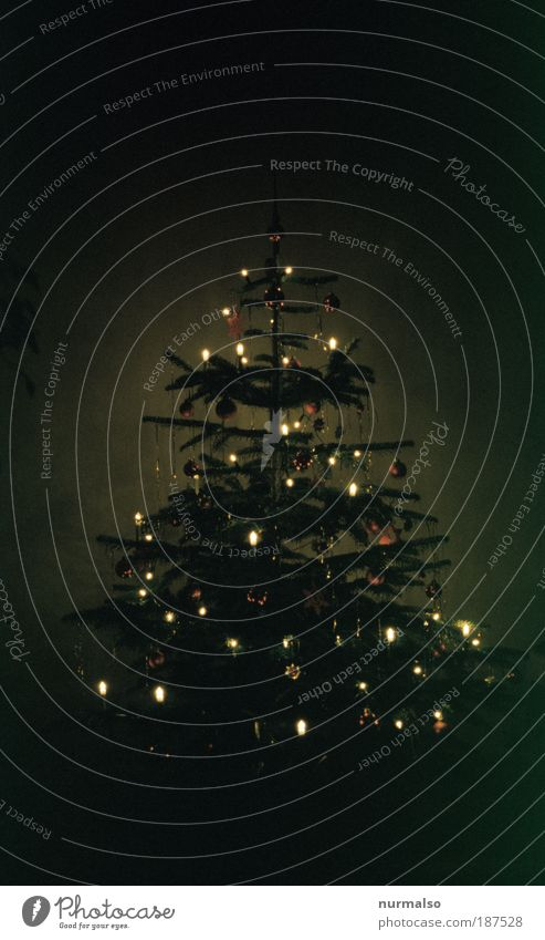 Christmas & Advent Tree Winter Calm Religion and faith Moody Infancy Feasts & Celebrations Together Glittering Flat (apartment) Living or residing Illuminate Decoration Desire Kitsch