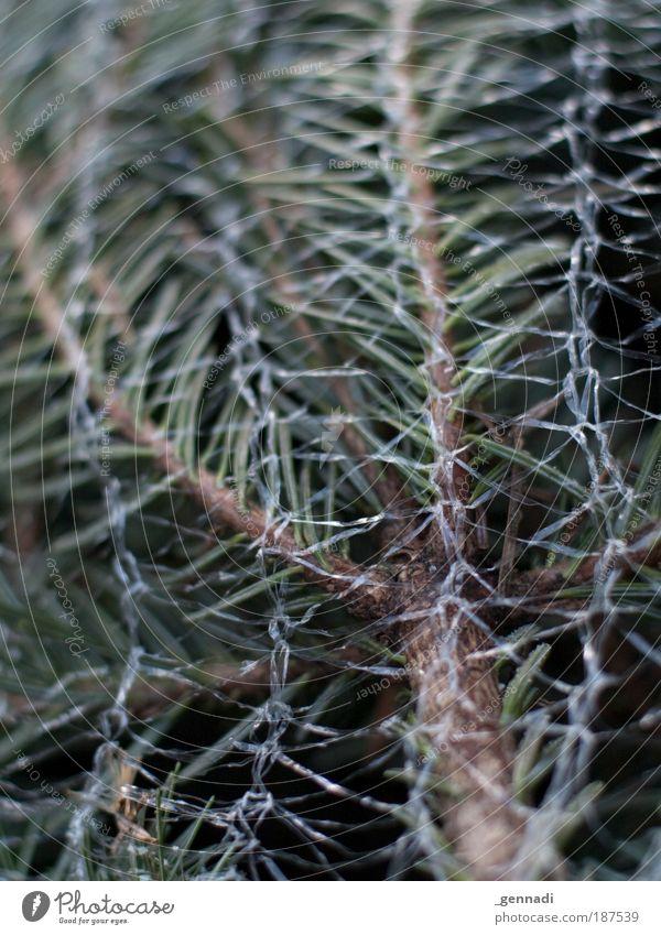 Christmas & Advent Green Christmas tree Net Fir tree Fir branch
