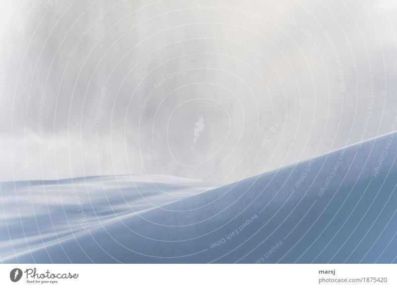 whiteout Nature Landscape Winter Fog Ice Frost Snow Snowfall Snowstorm Snowy hill Authentic Cold Purity Smooth Curved Minimalistic Colour photo Subdued colour