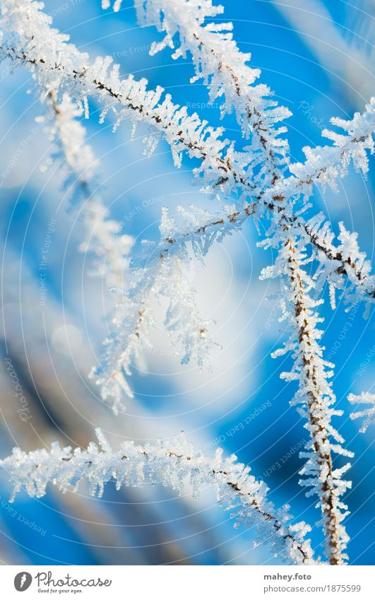 Nature Blue Christmas & Advent White Winter Cold Background picture Grass Garden Ice Point Frost Frozen Freeze Attractive Delicate