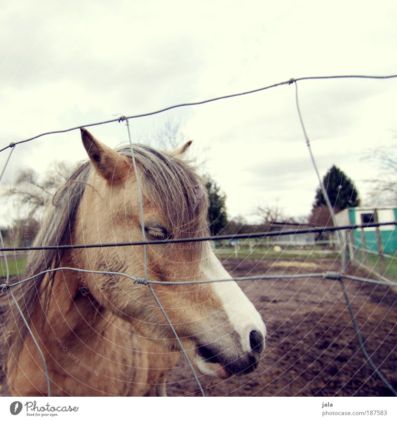 Calm Loneliness Animal Horse Animal face Pasture Fence Emotions Compassion