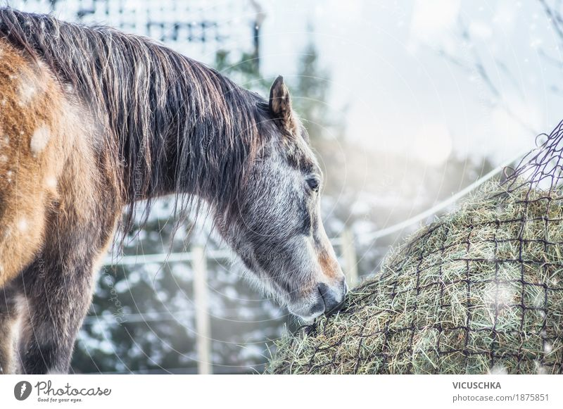 Horse Winter Hay Design Vacation & Travel Snow Nature Beautiful weather Animal 1 Feed hay net Colour photo Exterior shot Copy Space top Day Back-light