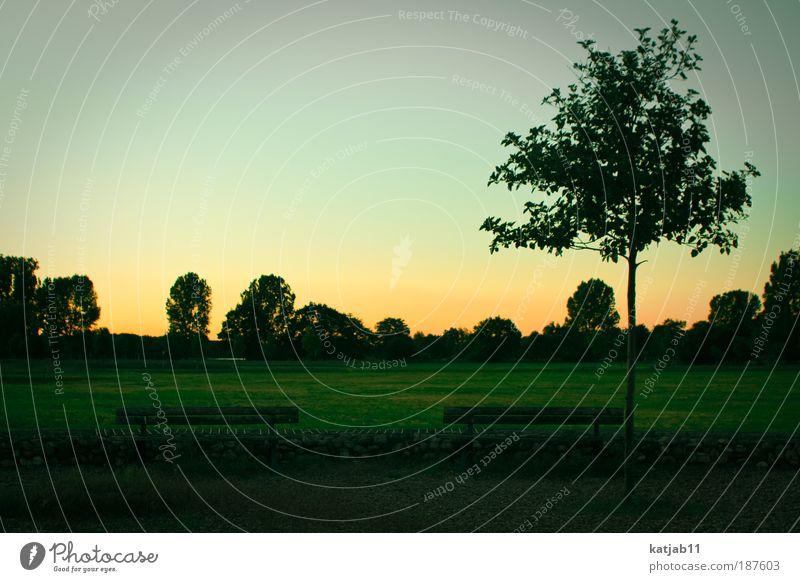 Sky Nature Green Tree Summer Calm Yellow Environment Landscape Meadow Grass Moody Park Horizon Contentment Arrangement