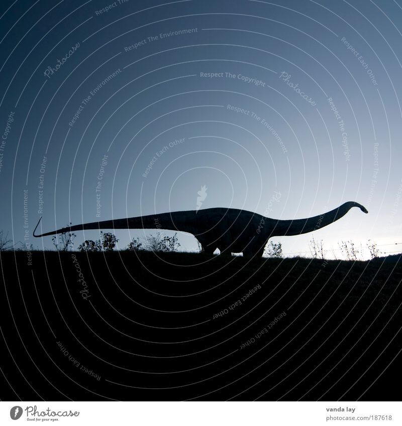 Sky Nature Animal Environment Earth Large Elements Evening Fear of the future Cloudless sky Nutrition Gigantic Colossus Dinosaur Extinct Fear