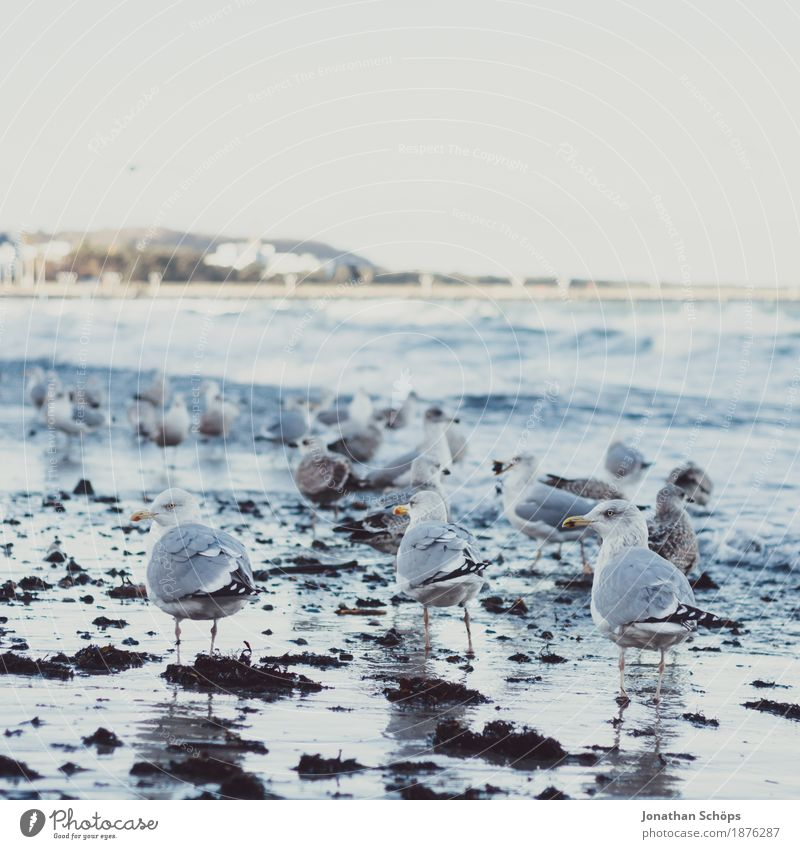 Seagulls in Binz VI Far-off places Beach Ocean Waves Winter Success Sand Water Sky Baltic Sea Bird 3 Animal Group of animals Flock Observe Cold Blue Gull birds