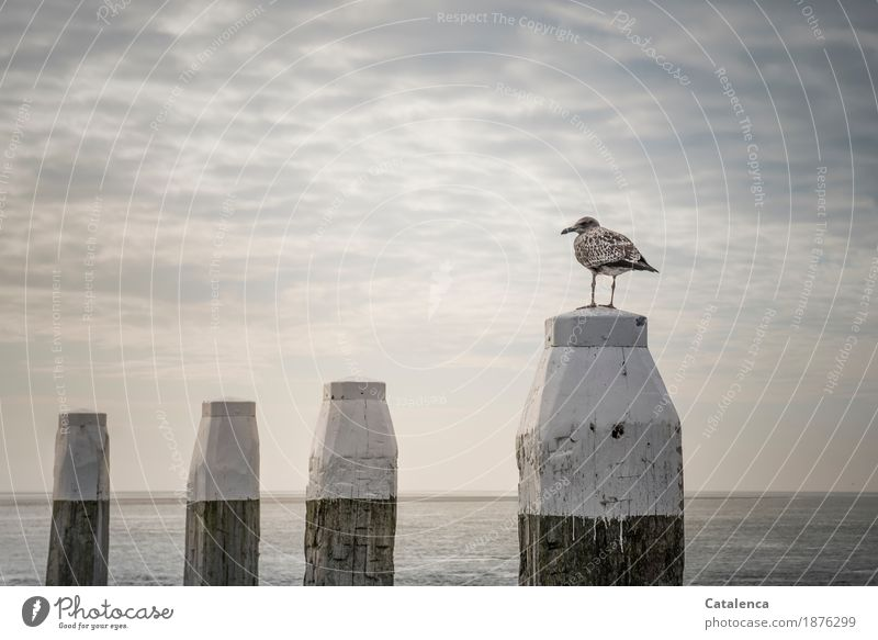 Sky Nature Summer Water White Ocean Loneliness Clouds Animal Environment Coast Wood Brown Bird Moody Horizon