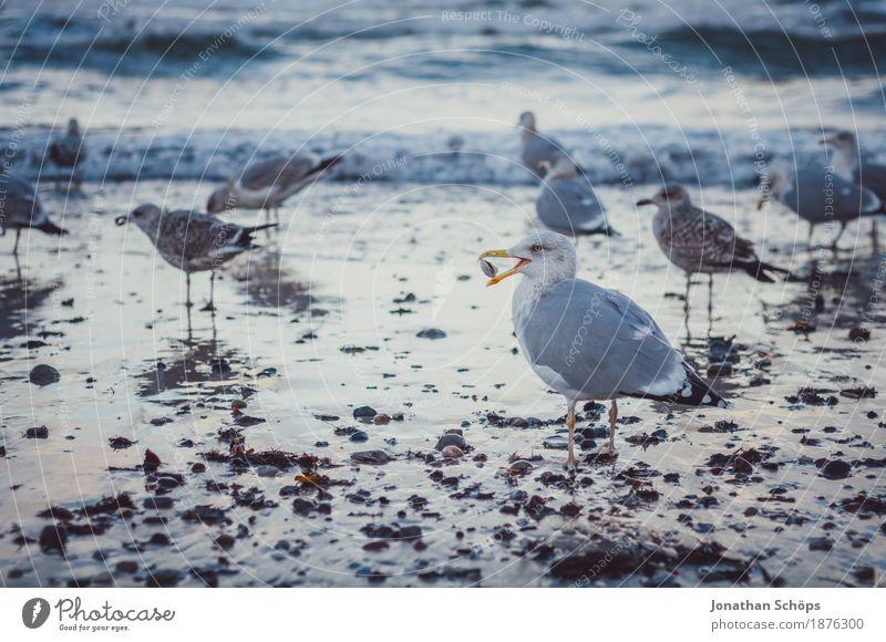 Blue Water Ocean Beach Winter Cold Bird Sand Success Walking Group of animals Observe Many Baltic Sea Seagull Rügen