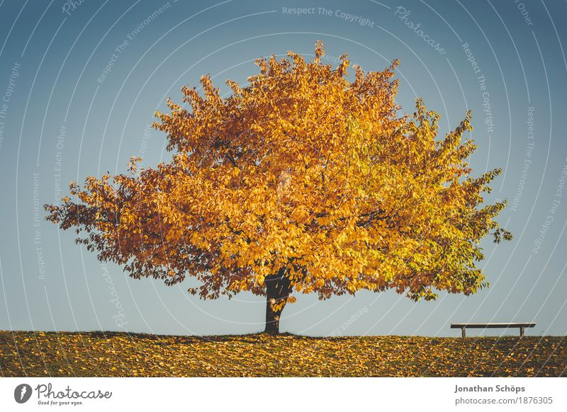 Nature Tree Landscape Relaxation Calm Environment Yellow Autumn Grass Lake Brown Contentment Individual Hope Belief Seasons
