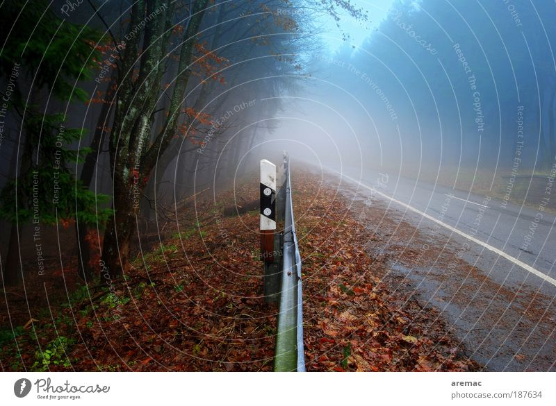 Plant Calm Street Forest Autumn Rain Landscape Road traffic Fog Environment Transport Earth Driving Traffic infrastructure Motoring Road sign