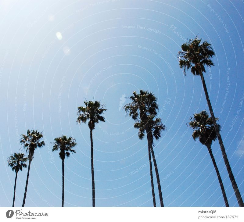 palm beach. Landscape Esthetic Palm tree Summer Beautiful weather Beach vacation Vacation & Travel Americas Florida California Relaxation Leisure and hobbies