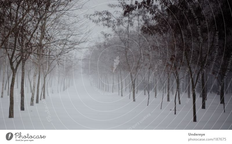 Tree Lines Nature Plant Winter Beautiful weather Bad weather Ice Frost Snow Park Simple Cold Gray White Moody Peace Horizon Climate Andriy Yeroshewych Odessa
