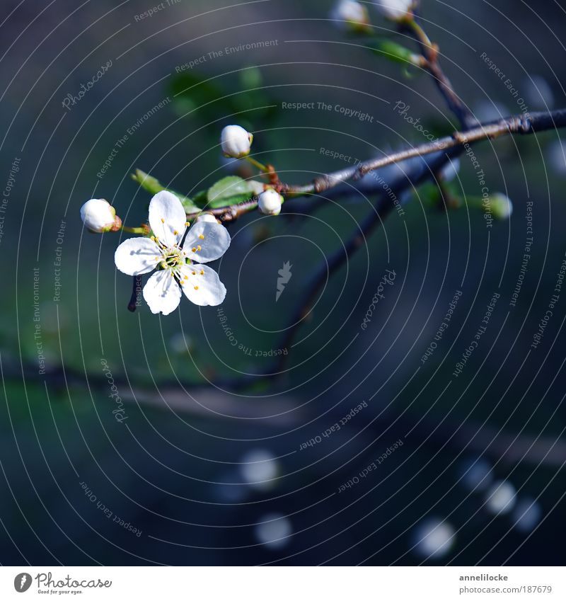 Nature Beautiful Tree Plant Leaf Blossom Spring Happy Park Environment Hope Growth Delicate Blossoming Fragrance Time