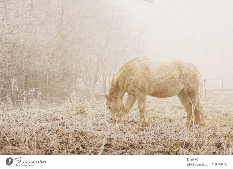 Winter morning on the pasture Ride Nature Landscape Autumn Bad weather Fog Ice Frost Snow Tree Grass Edge of the forest Meadow Pasture Animal Pet Farm animal
