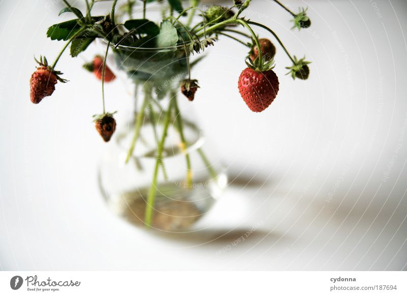 Nature Beautiful Plant Nutrition Life Food Healthy Fruit Elegant Esthetic Decoration Uniqueness Transience Healthy Eating Idea To enjoy