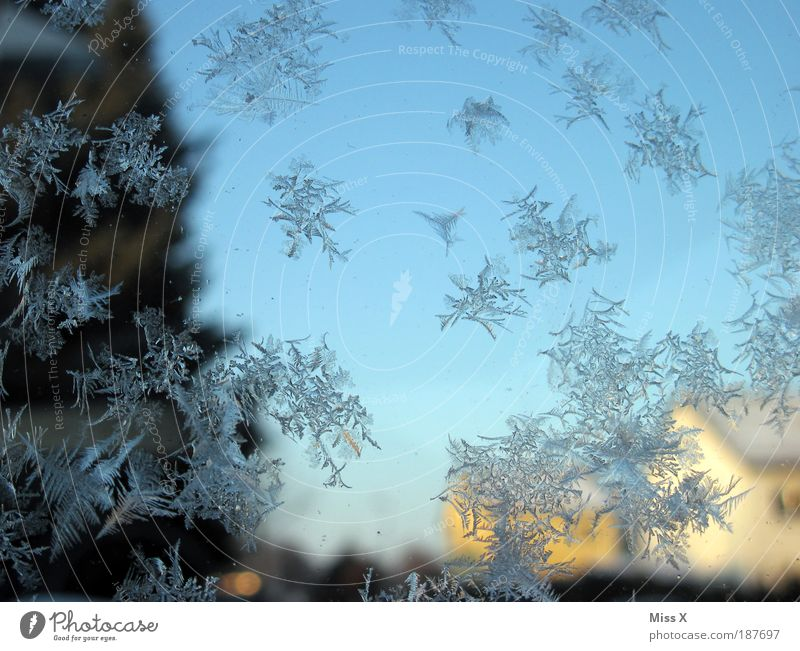 Birthday ice flowers Living or residing Winter Weather Ice Frost Garden Window Door Cold Water Frostwork Pane Minus degrees Colour photo Exterior shot Close-up